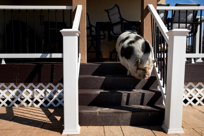 Arnold walks down the back steps of her home in order to go lie in the sun.