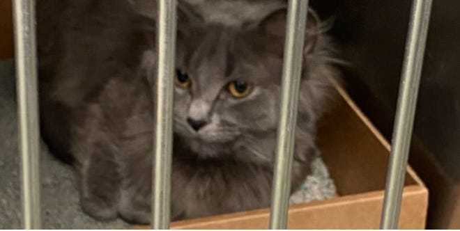 Cincinnati Animal Care took in 30 cats this week after finding more than they bargained for at a Colerain Township home.